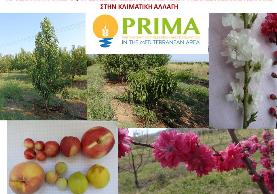 Επιτυχία ΤΦΟΔ στο πρόγραμμα PRIMA: Εγκρίθηκε η πρόταση FREECLIMB  στο ανταγωνιστικό πρόγραμμα PRIMA