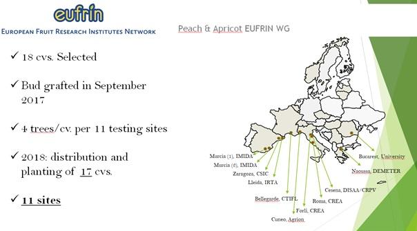 Συμμετοχή του ΤΦΟΔΝ σε συνάντηση εργασίας του Ευρωπαϊκού δικτύου μελέτης ροδακινιάς και βερικοκιάς (EUFRIN for peach and apricot).